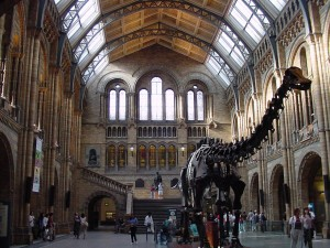 Natural-History-Museum-Attractions-in-London